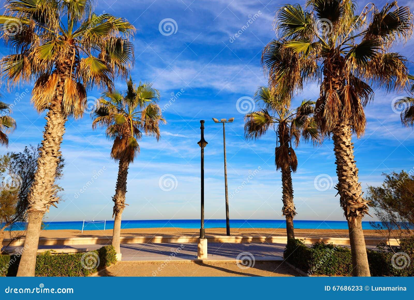 Palme della spiaggia di valencia la malvarrosa spagna for Spiaggia malvarrosa valencia