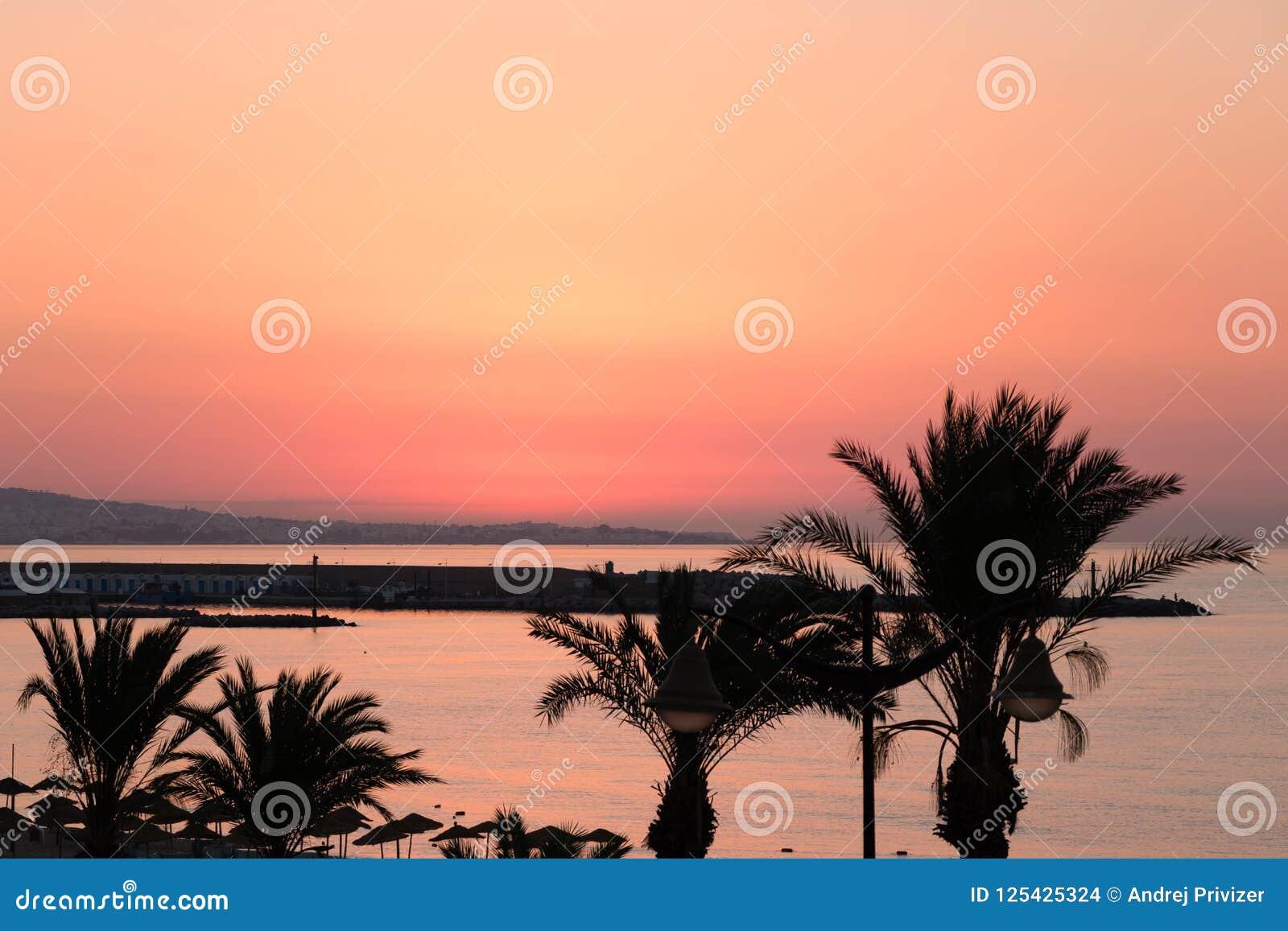 Palme Di Buongiorno Yasmine Hammamet Tunisia Africa