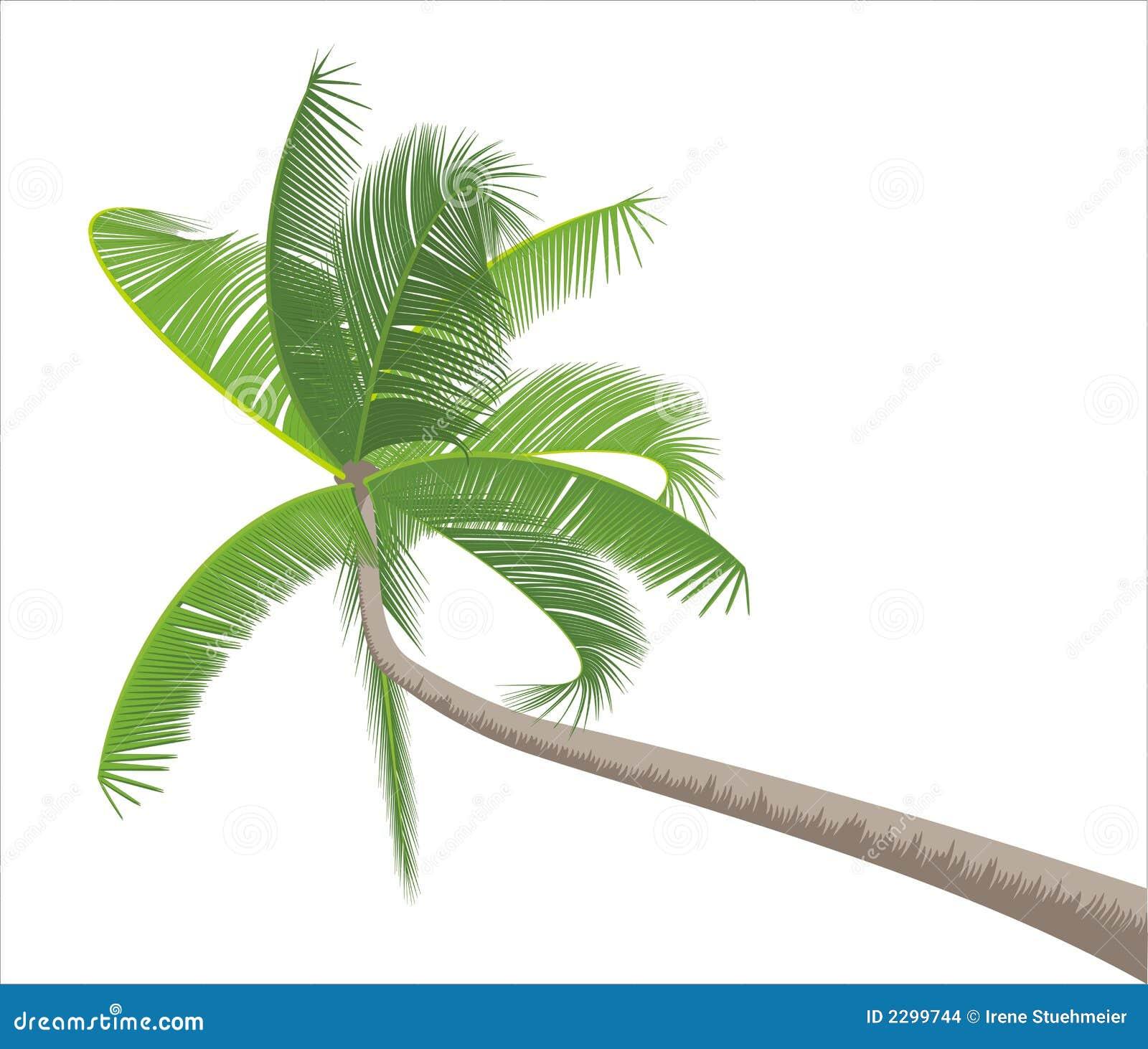 Palme getrennt auf Weiß