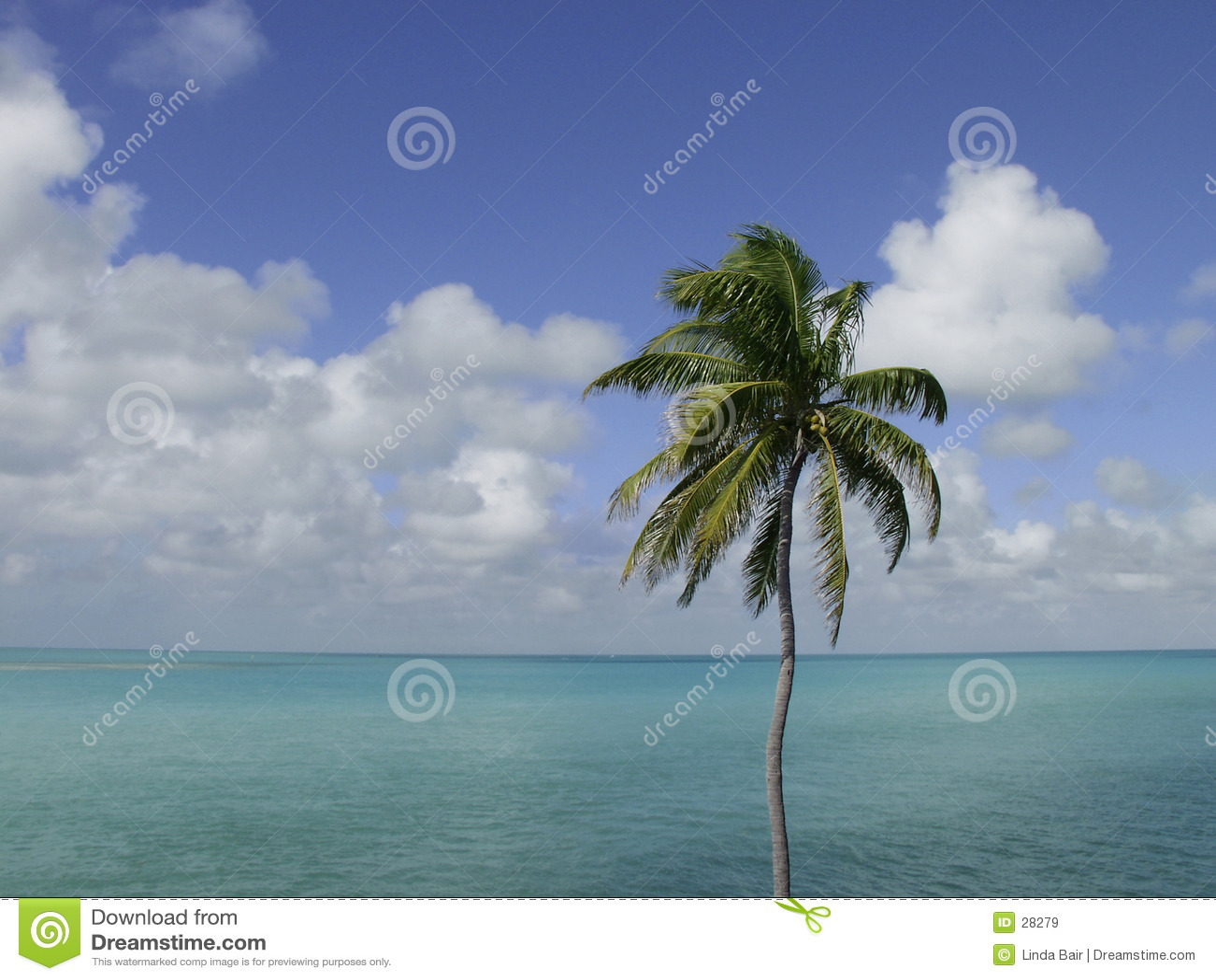 Palme, Himmel, Ozean