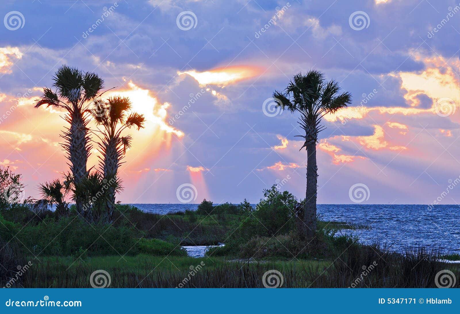 Palme incorniciate da un tramonto