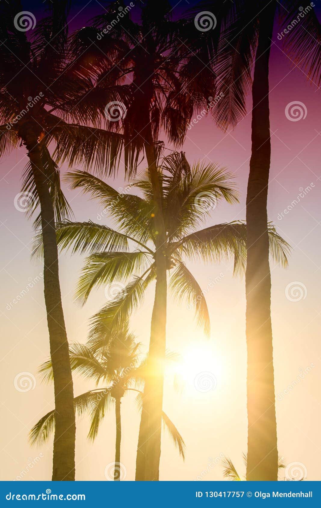 Palme proiettate su cielo blu Bello fondo tropicale, abbagliamento del sole, retro, filtro d annata