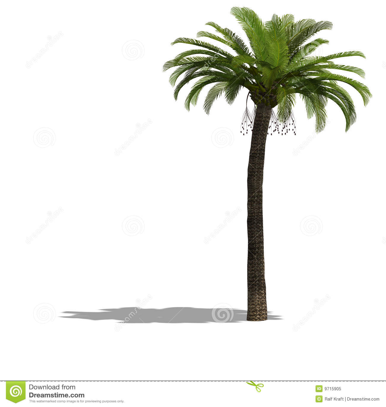 Palme Tree Royalty Free Stock Photo Image 9715905