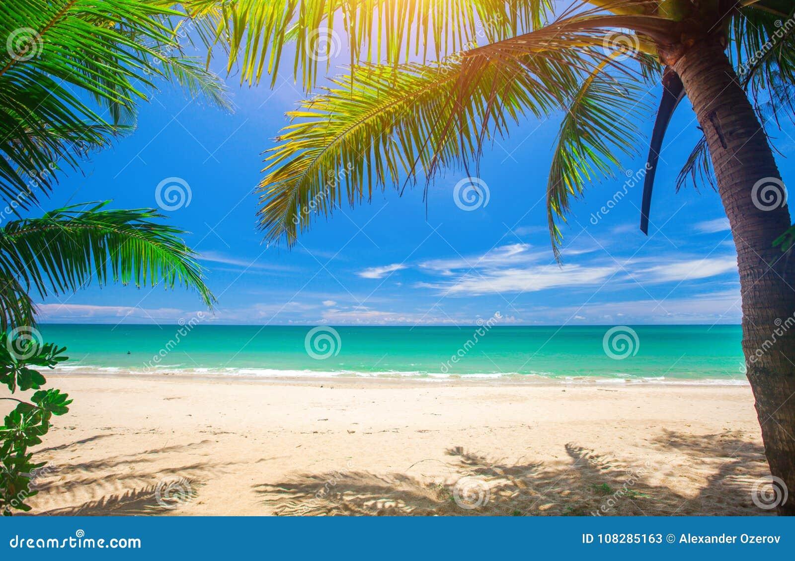 Palme und tropischer Strand