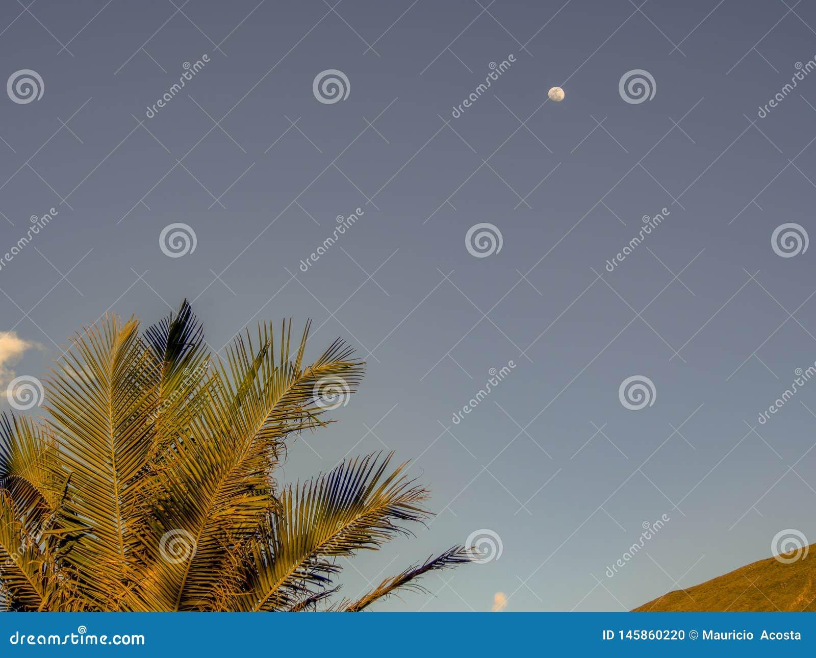 Palme verlässt mit dem Mond im Abstand
