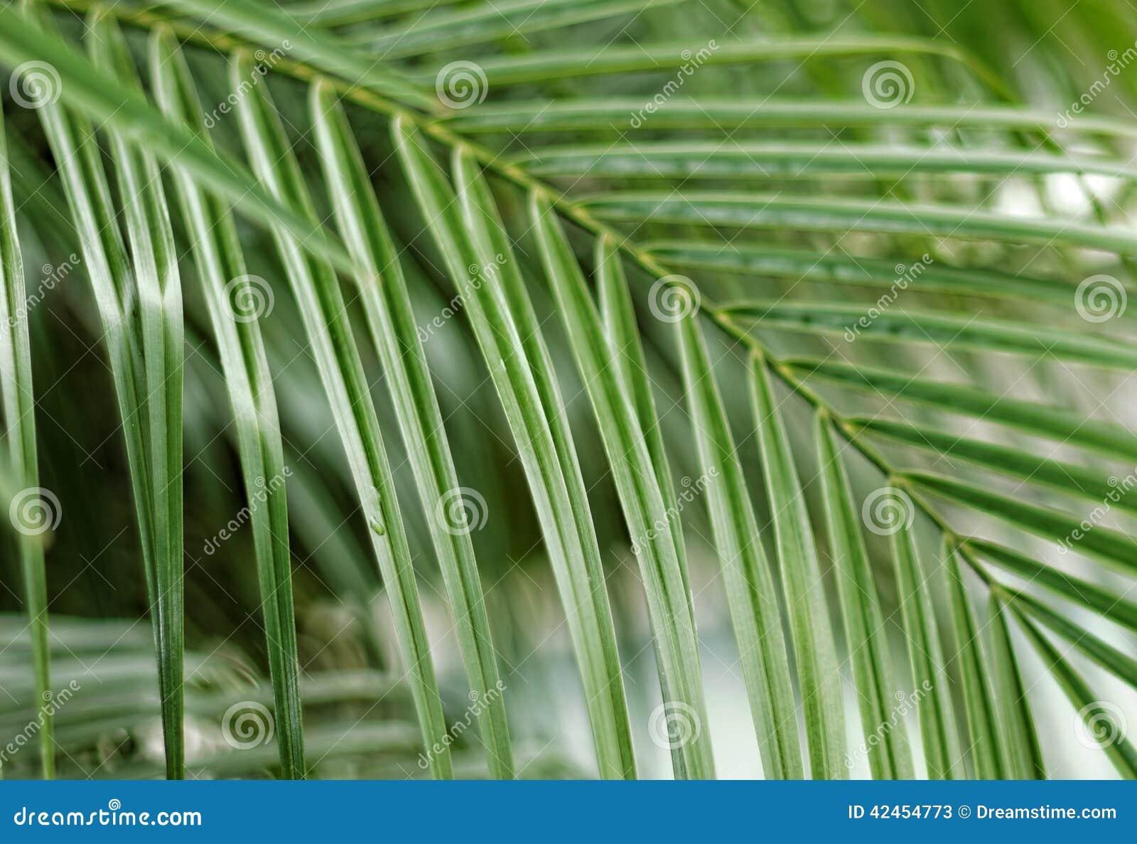 Palmeblätter