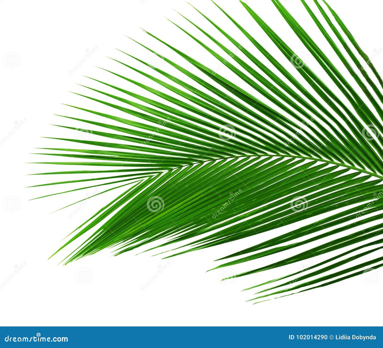 Palmeblatt lokalisiert