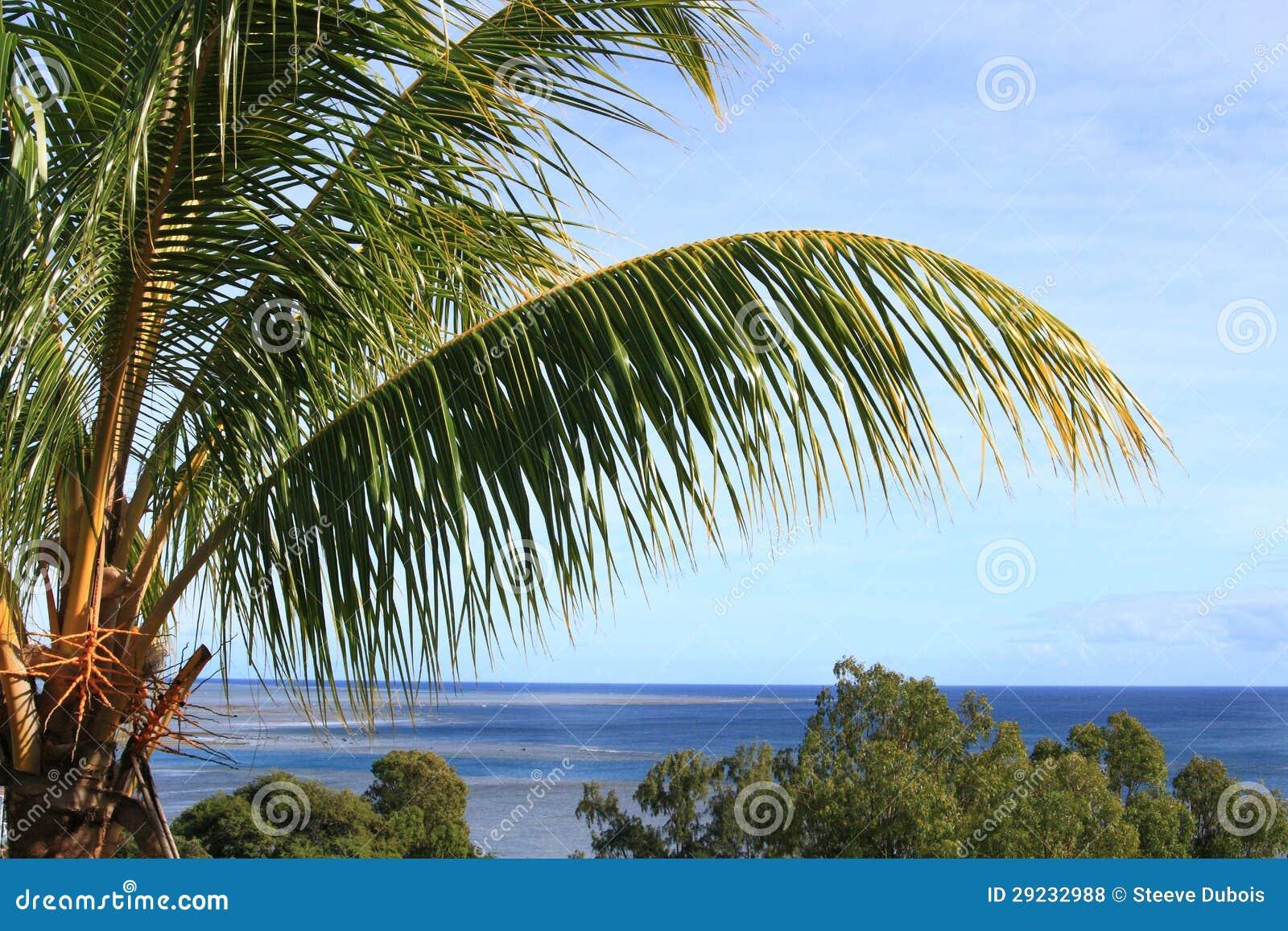 Download Palmeira Com O Oceano No Fundo Foto de Stock - Imagem de outdoors, árvore: 29232988