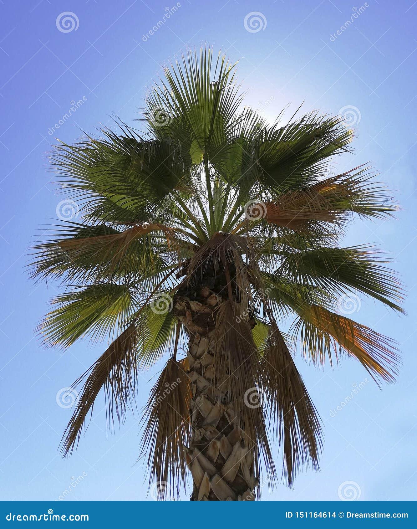 Palmeira com um fundo ensolarado