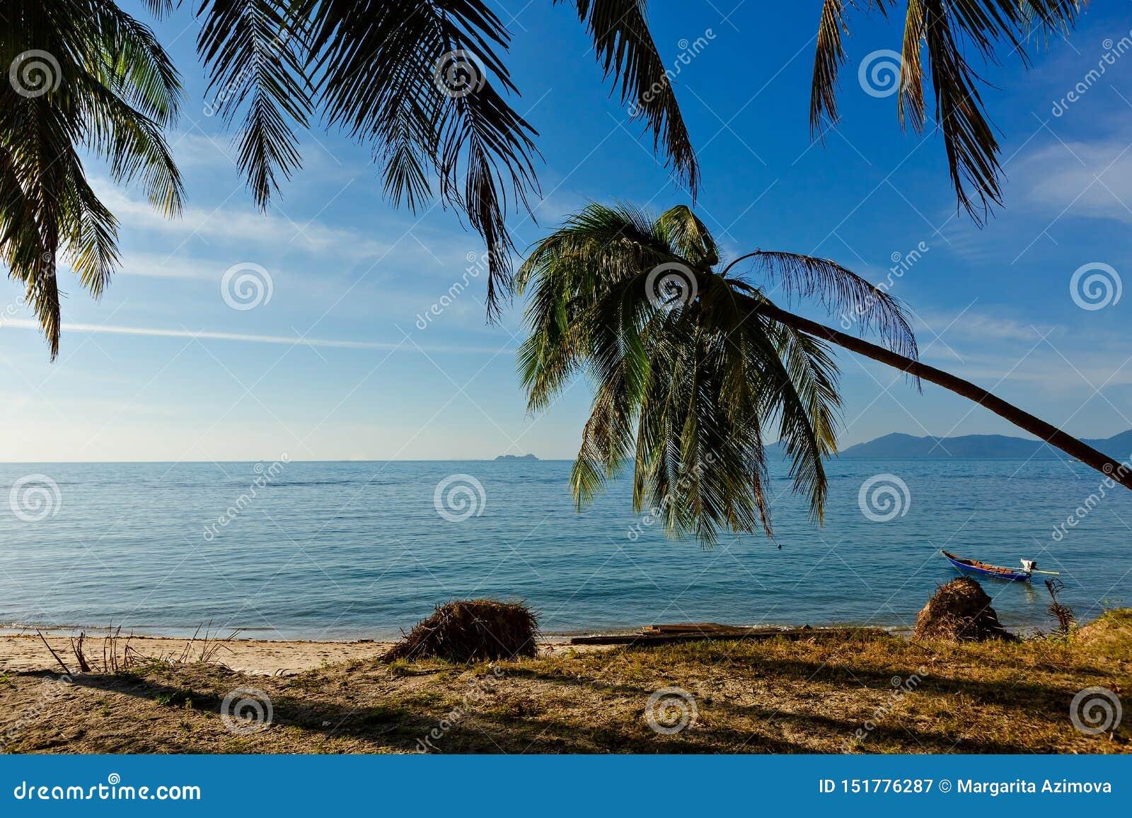 Palmeira do coco no Sandy Beach branco Vista panor?mico Vista bonita da praia ensolarada limpa calma