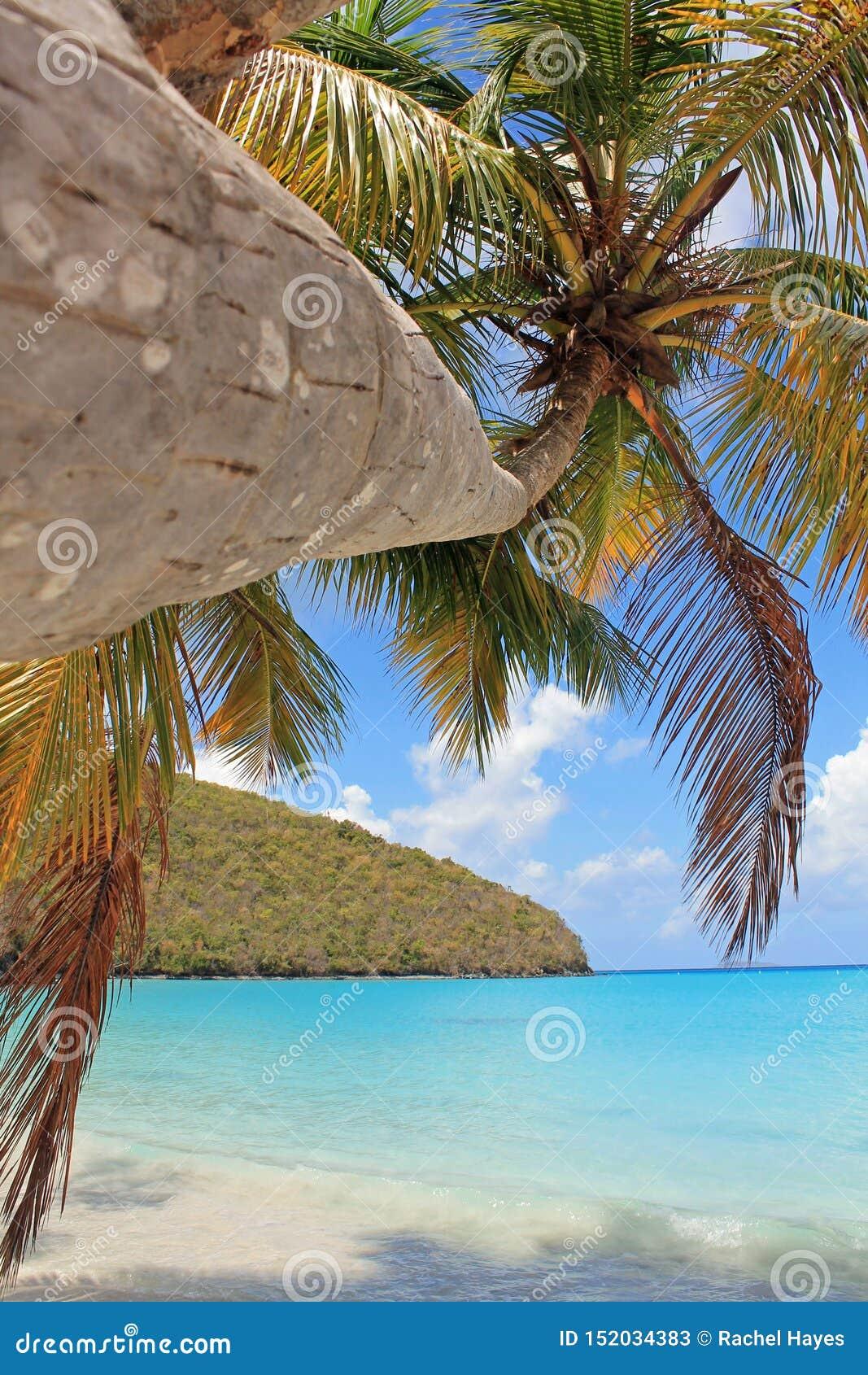 Palmeira na ilha tropical da praia