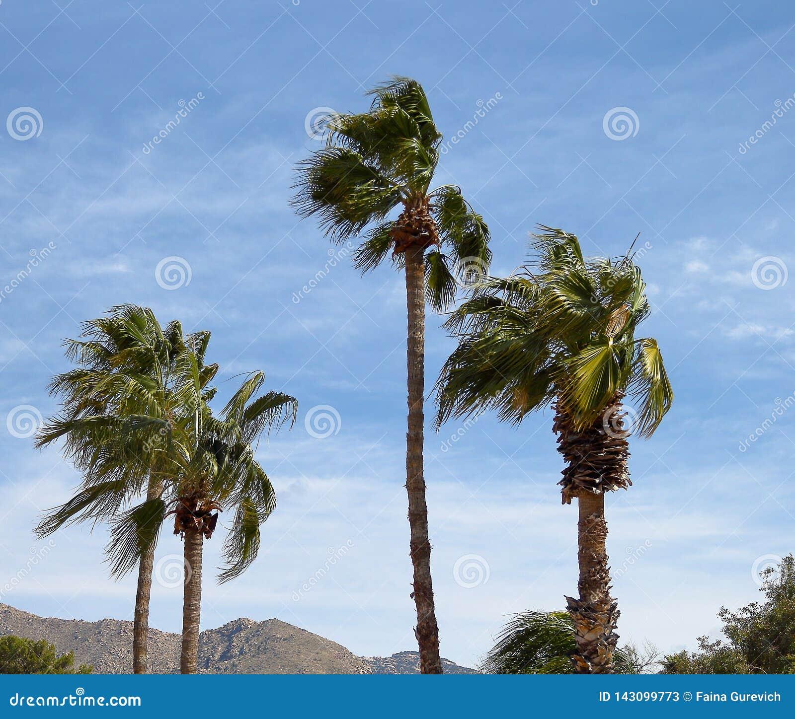 Palmeira que funde no vento