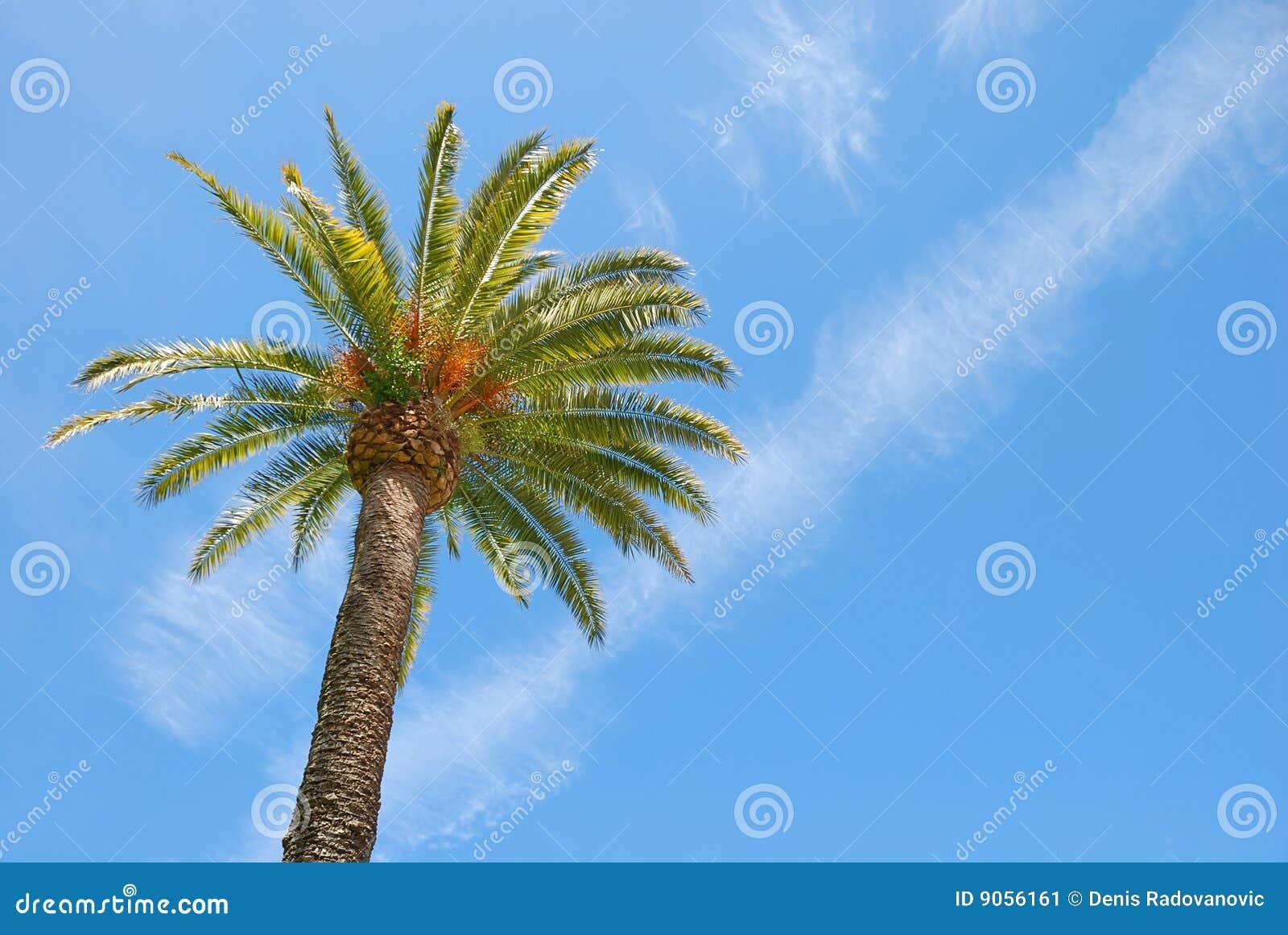 Palmeira Sunlit