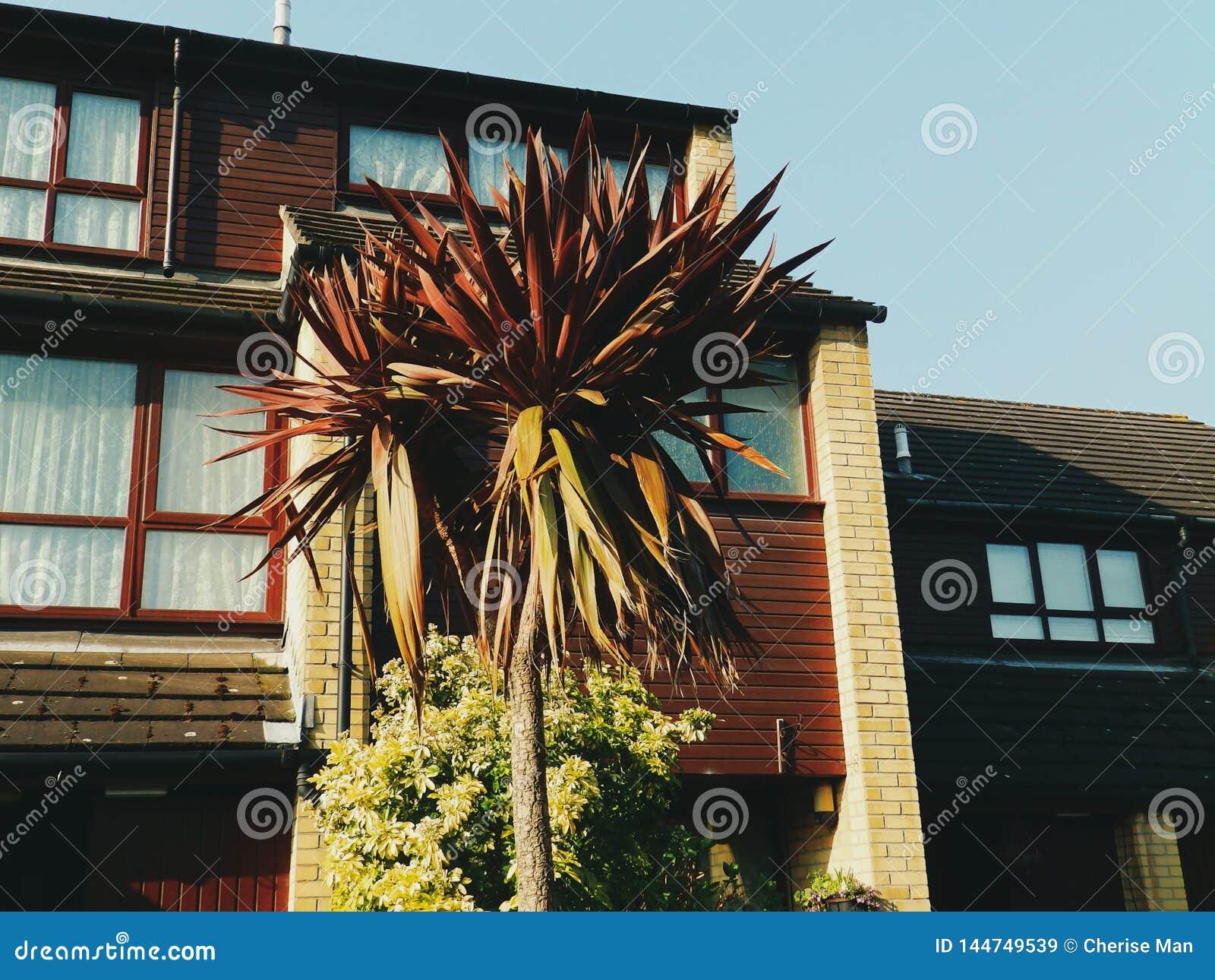 Palmeira tropical exótica do vintage retro