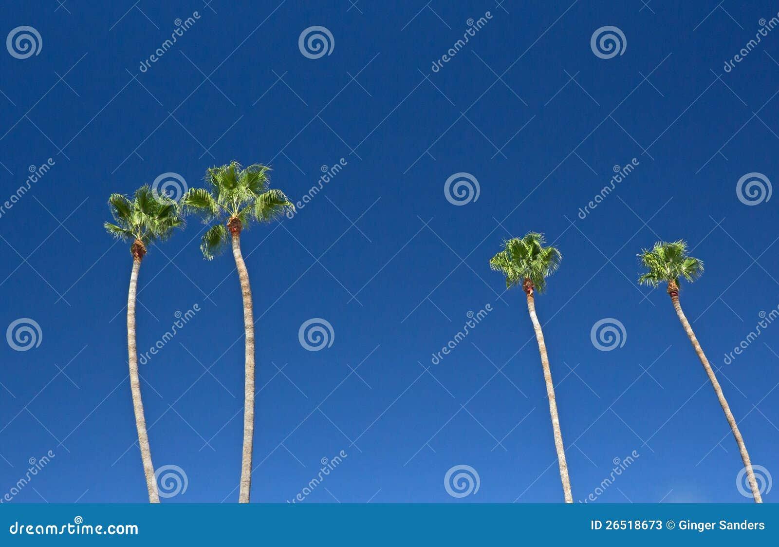 Palmeiras altas no céu azul brilhante