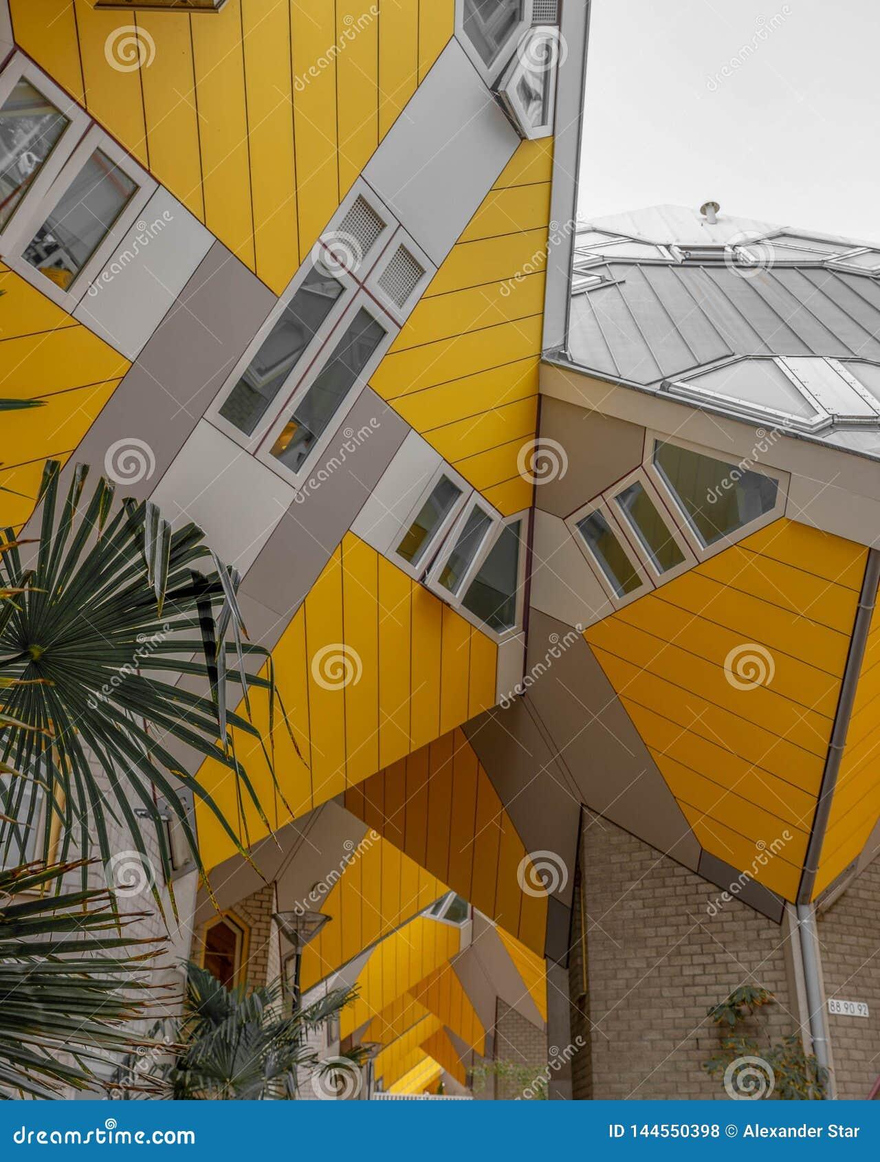 Palmeiras das casas do cubo de Rotterdam