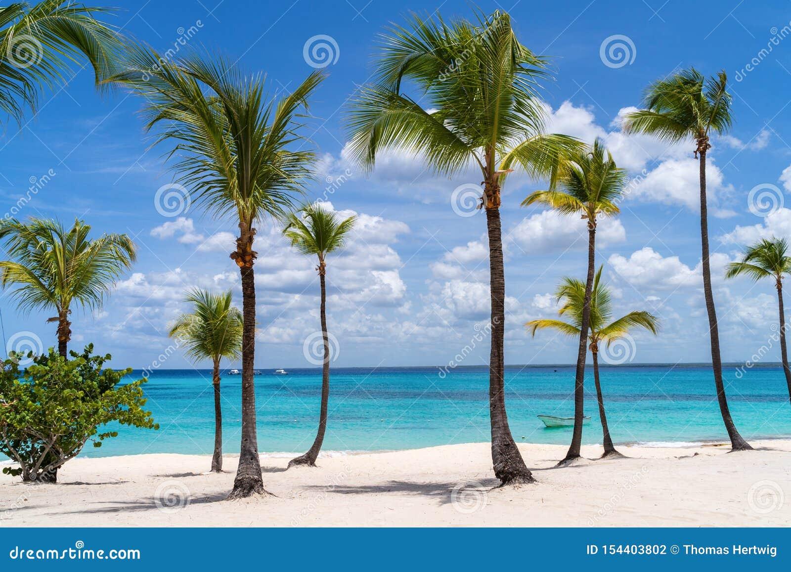 Palmeiras em Catalina Island na República Dominicana