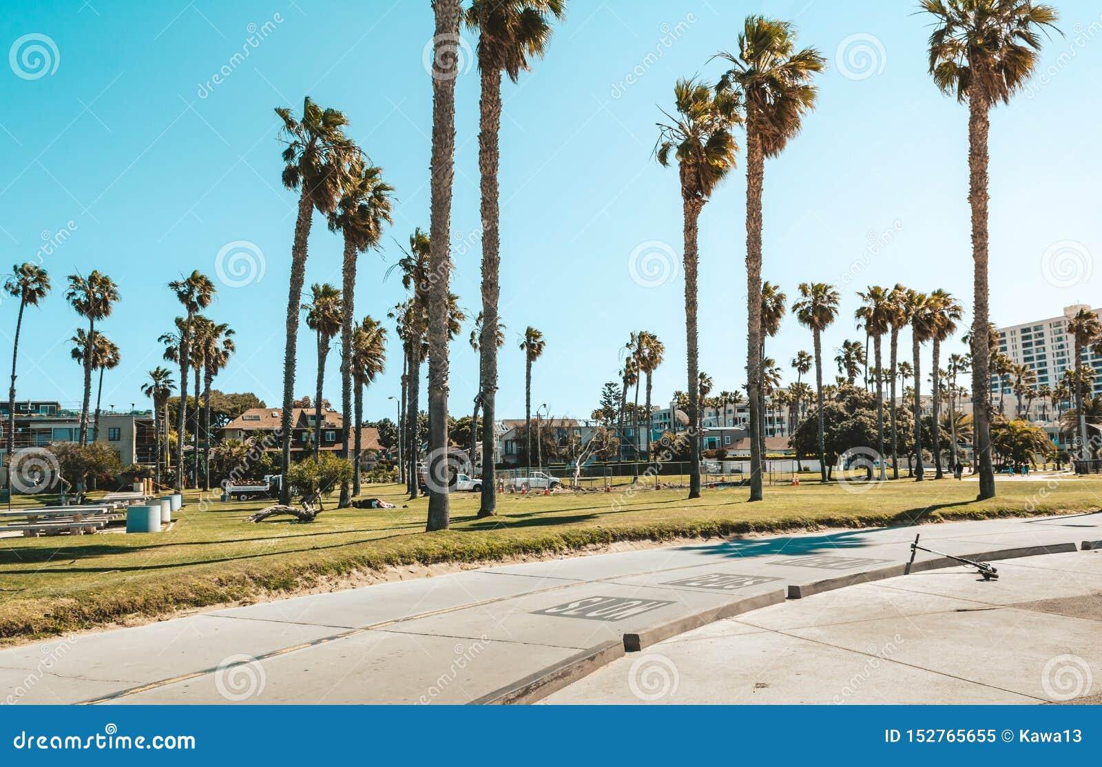 Palmeiras na praia de Santa Monica