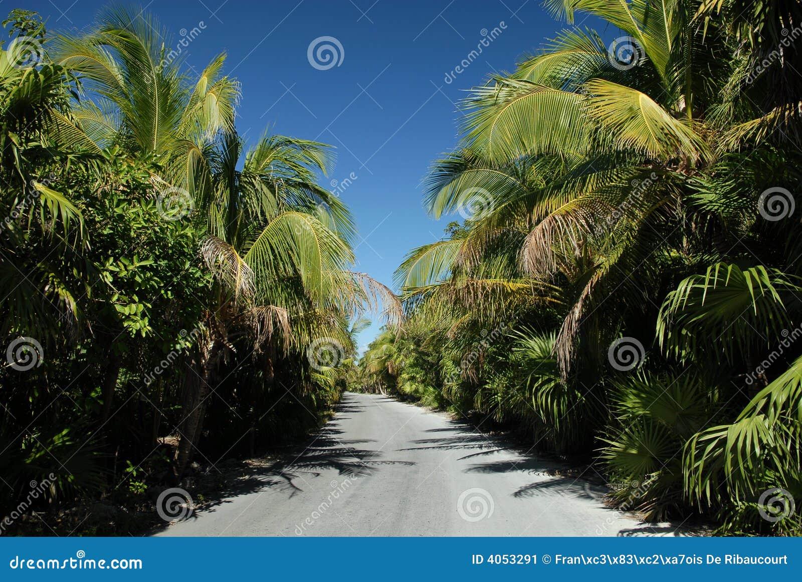 Palmeiras que alinham a estrada da praia