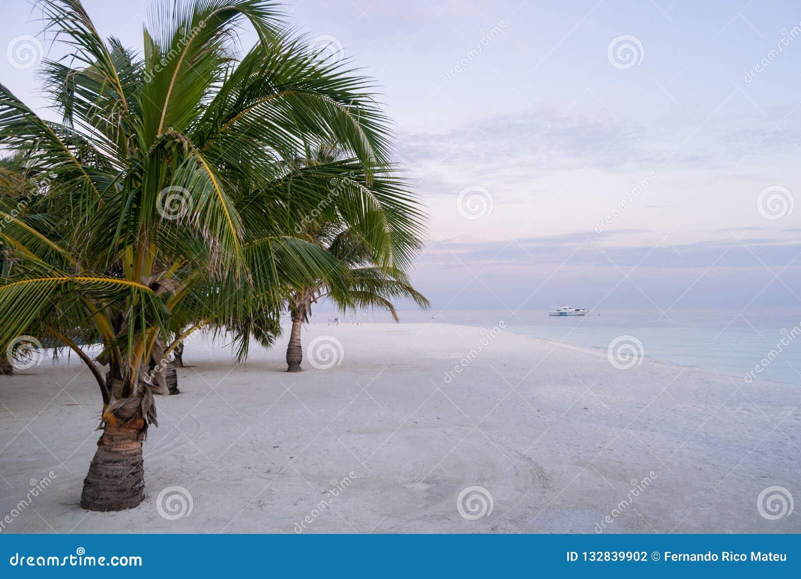 Palmeiras sobre a praia e a lancha brancas da areia sobre a lagoa de turquesa em Maldivas no por do sol