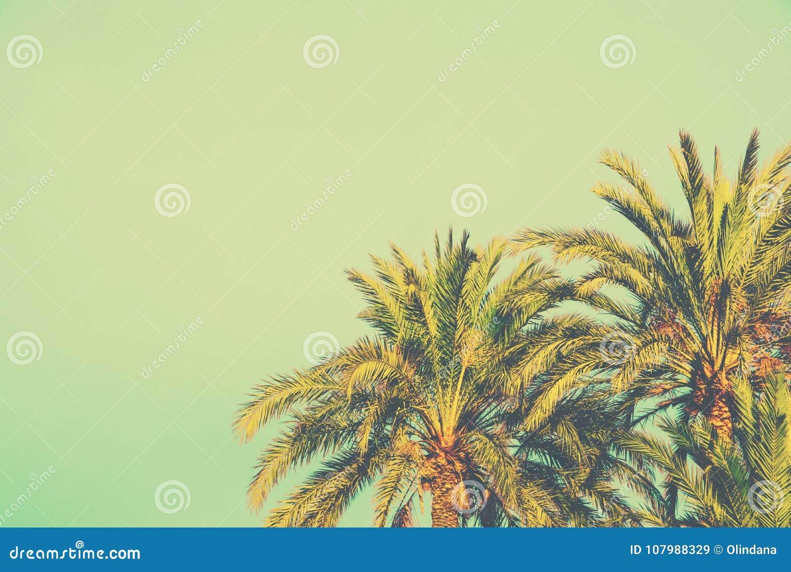 Palmen auf getontem hellem Türkis-Himmel-Hintergrund Art-Kopien-Raum der Weinlese-60s für Text Tropisches Laub Küsten-Ozean-Stran