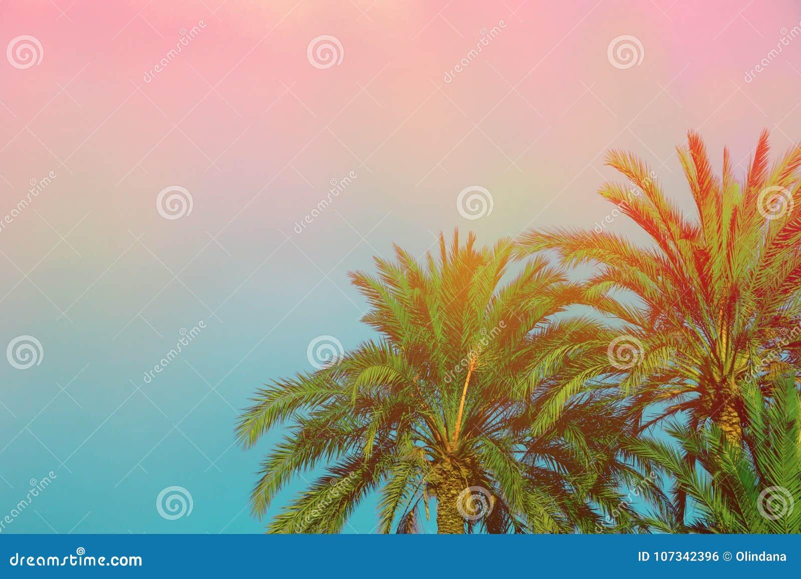Palmen auf getontem purpurrotem blauem rosa Himmel-Hintergrund mit goldenem Sun-Aufflackern Kopieren Sie Raum für Text Tropisches