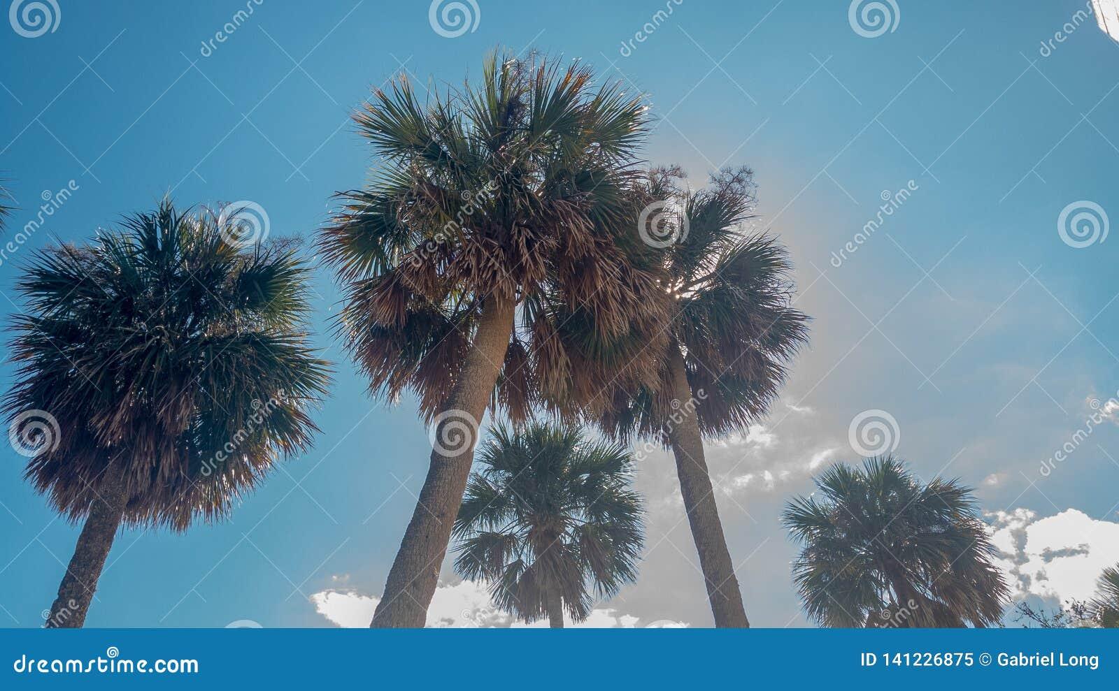 Palmen die in de Zon in Sunshine state zonnebaden