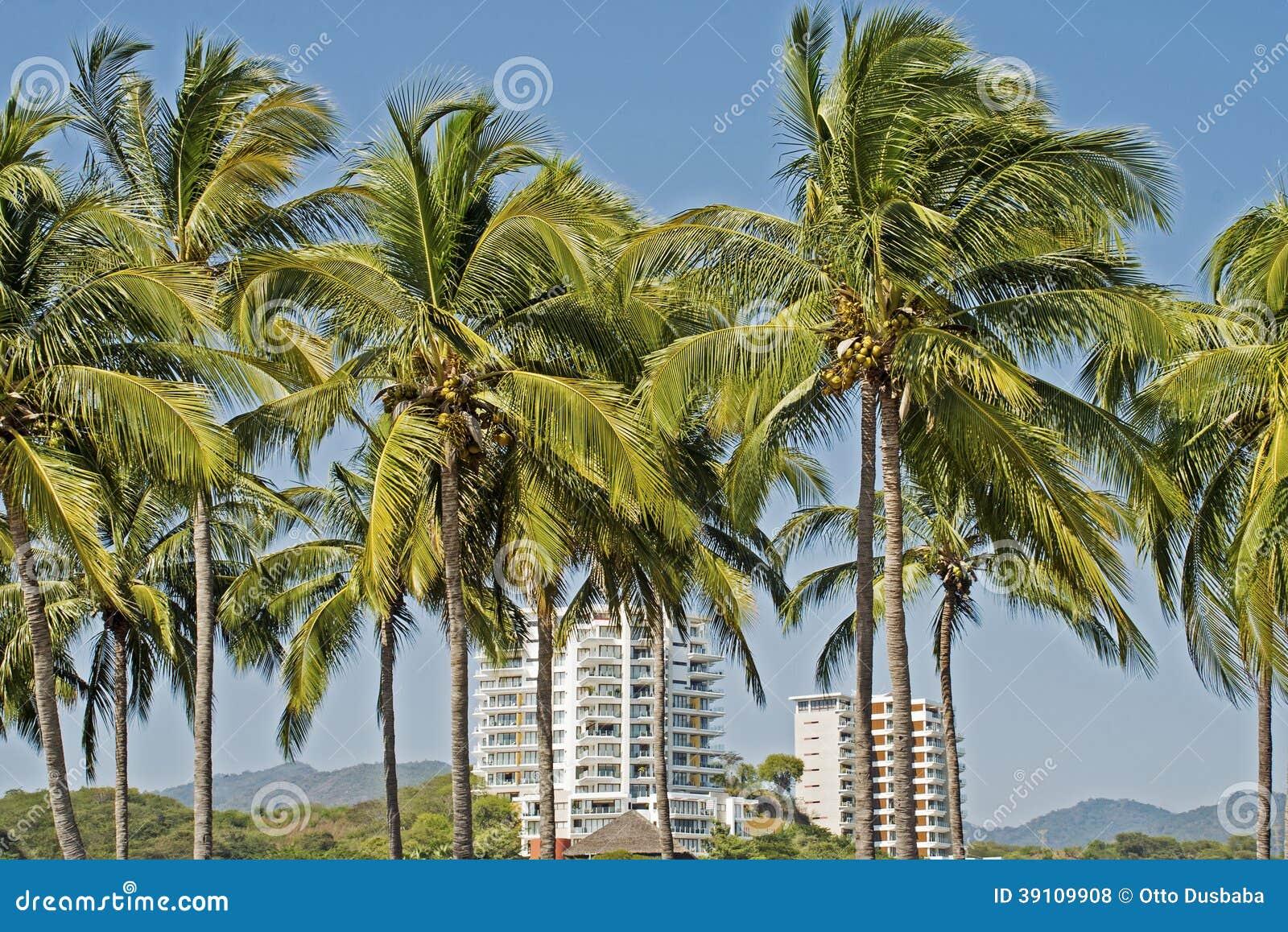 Palmen die op woonhigh-rise uitzien