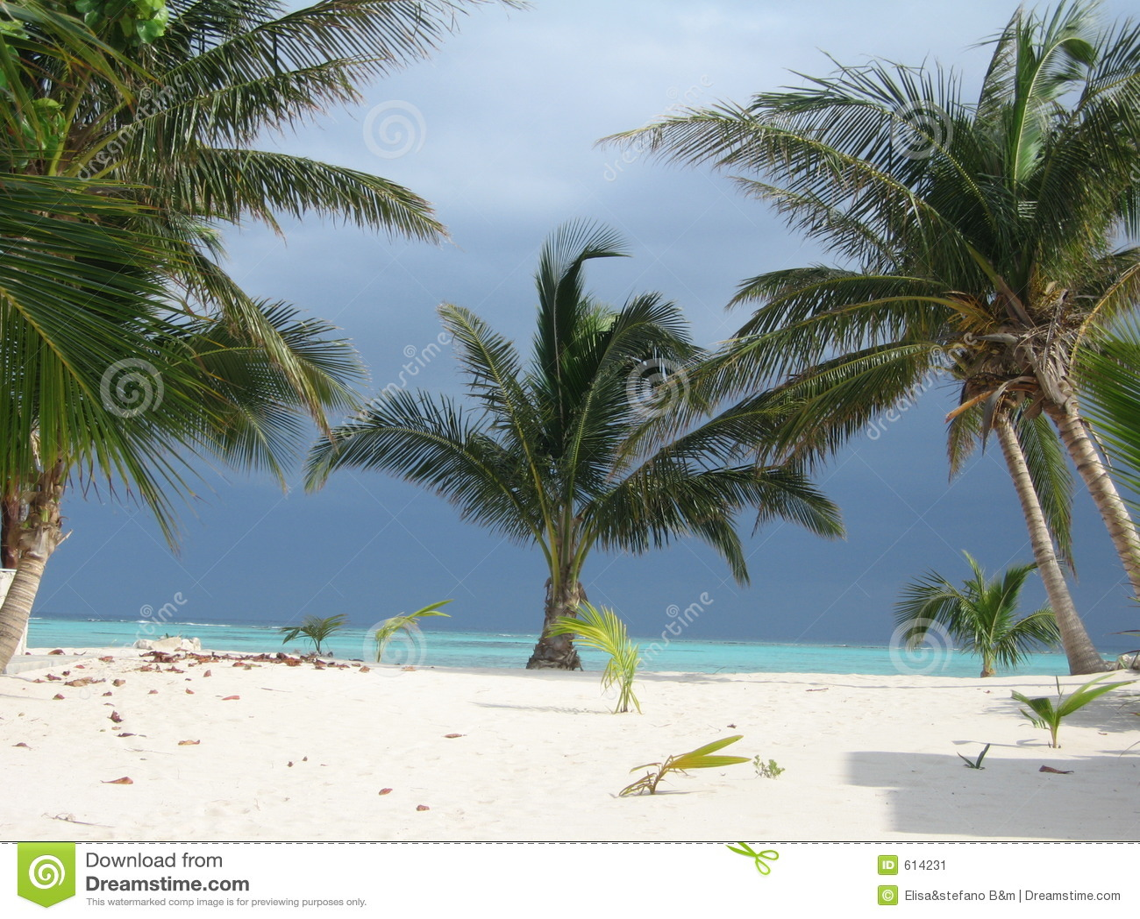 Palmen en Overzees