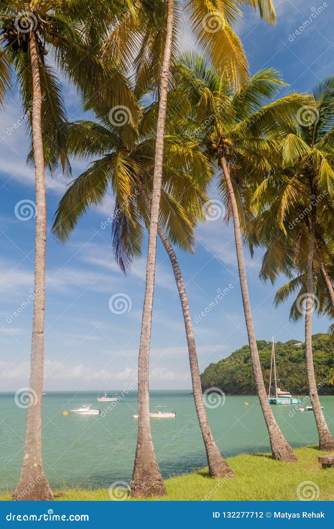 Palmen entlang der Küste von Ile Royale in Französisch-Guayana