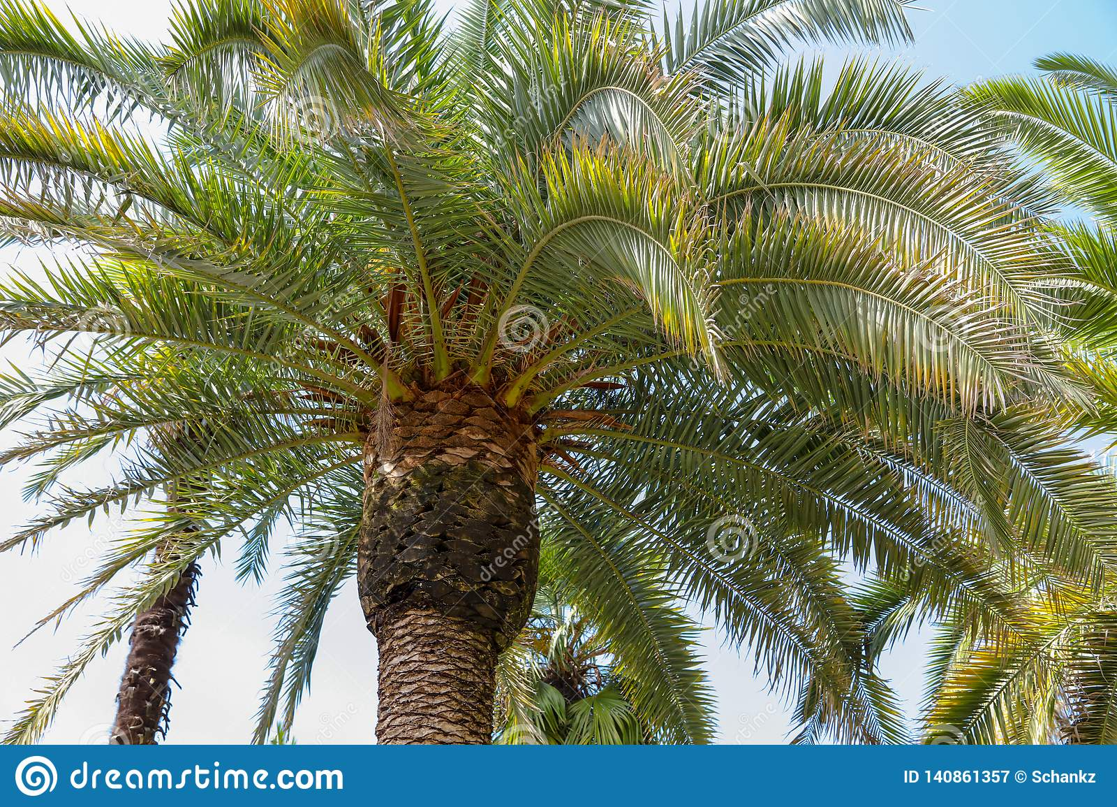 Palmen in het park Subtropisch klimaat