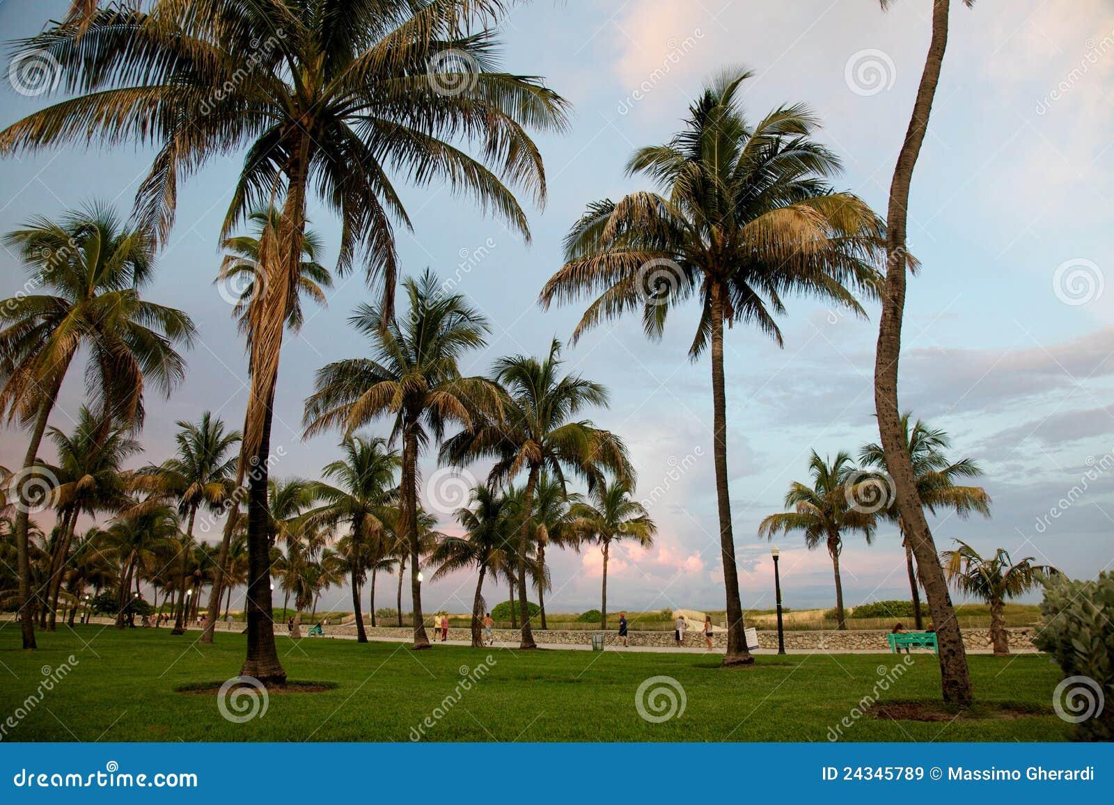 Palmen in het strand van miami vóór zonsondergang stock afbeelding