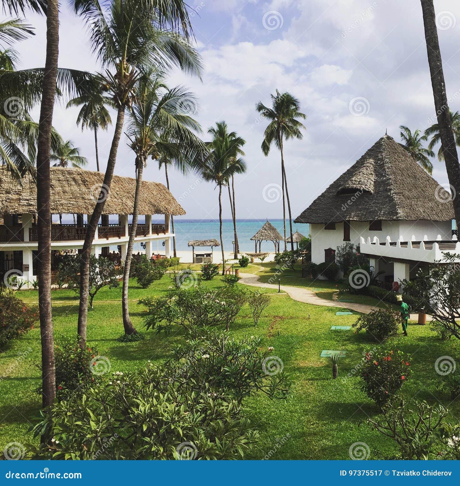 Palmen nahe dem Ozean