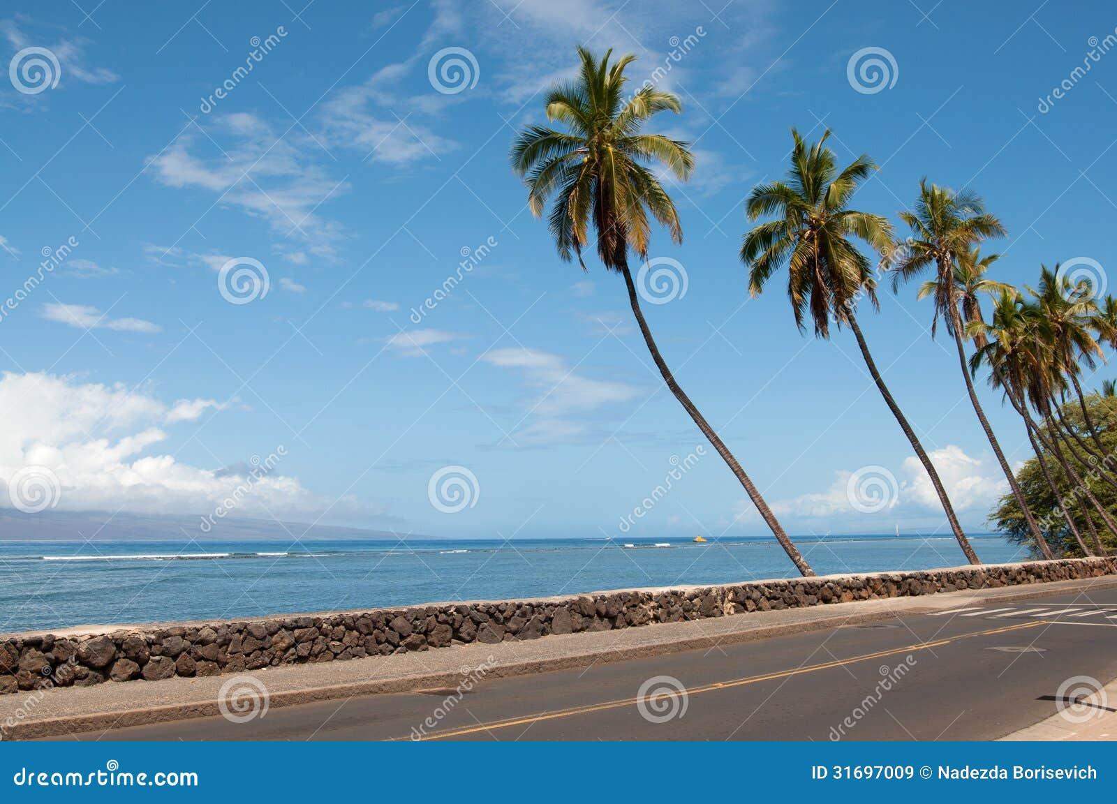 Palmen nahe der Straße
