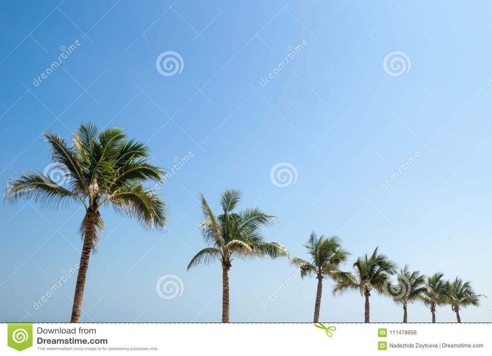 Palmen op een achtergrond van een blauwe hemel