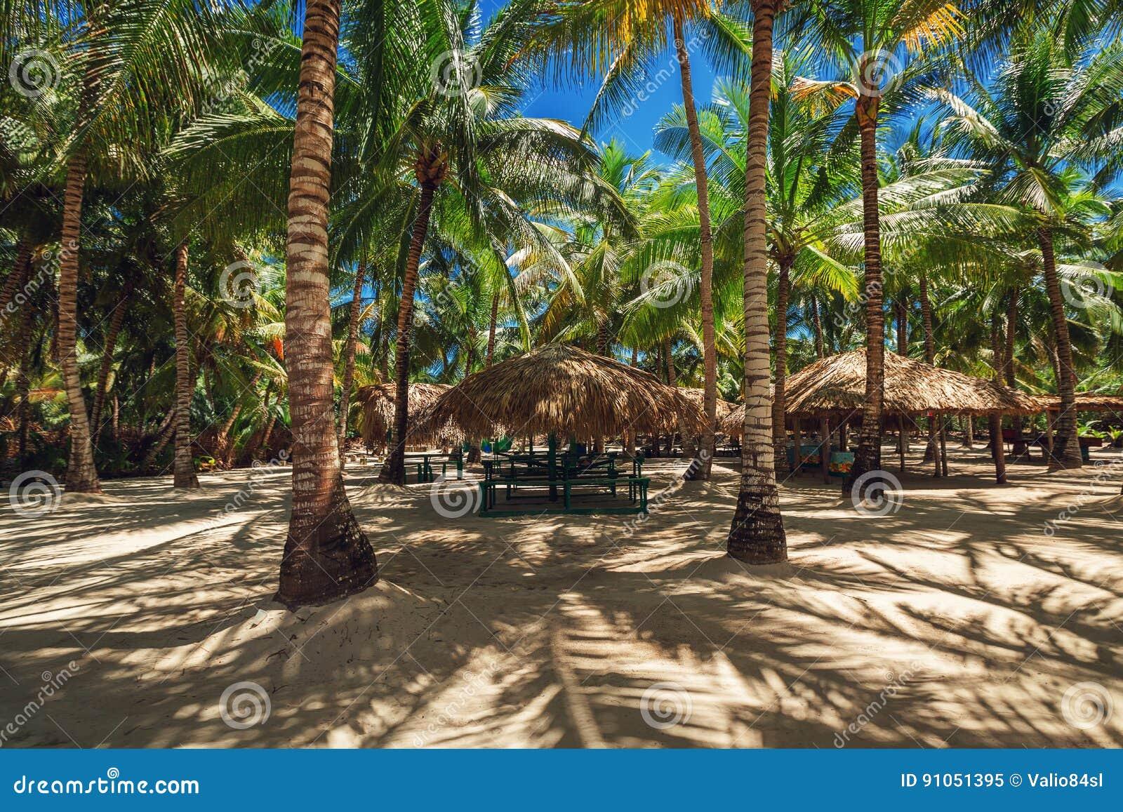 Palmen op het tropische strand Het Eiland van Saona