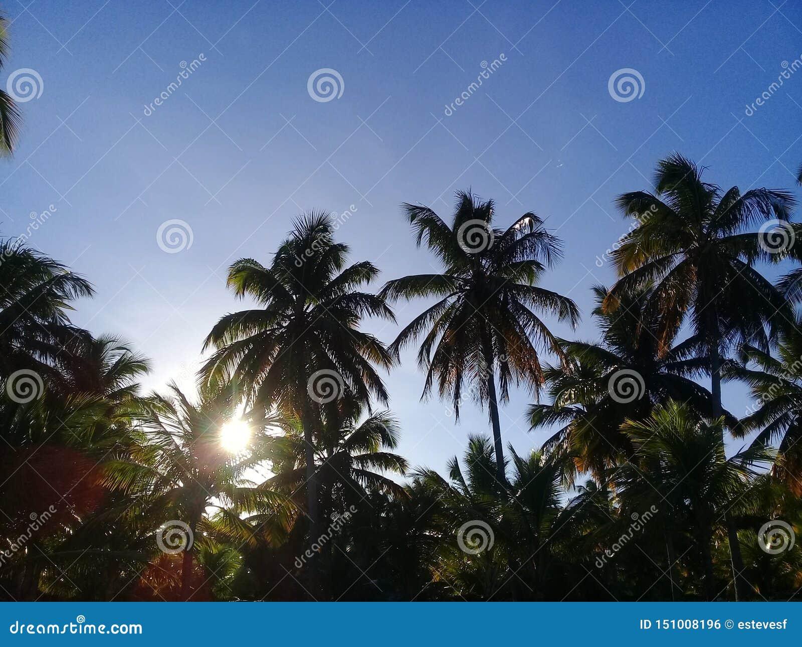 Palmen op zonsondergang met blauwe hemel