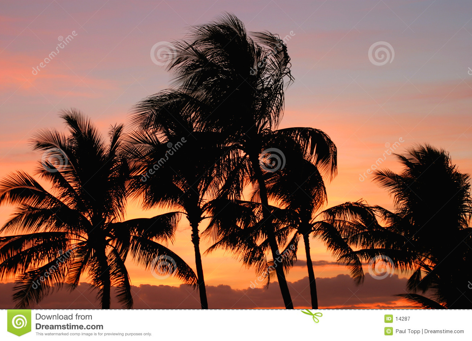 Palmen am Sonnenuntergang