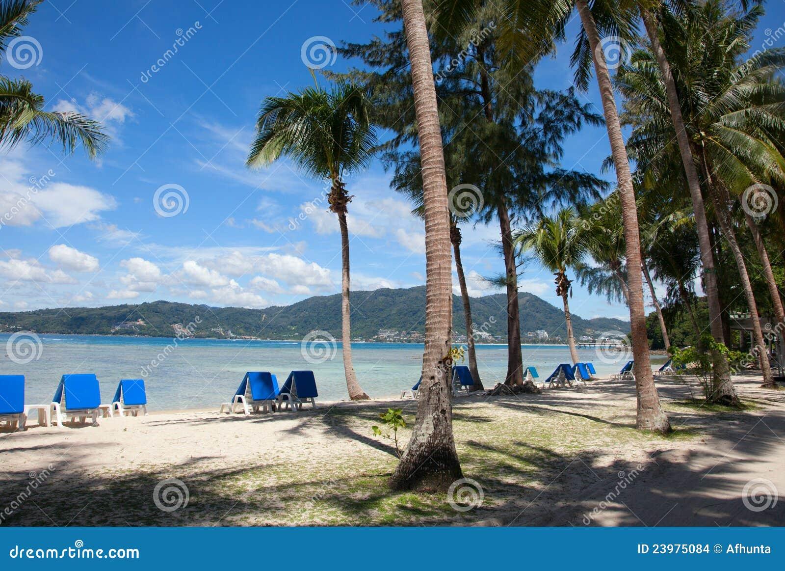 Palmen strand en ligstoelen stock afbeeldingen beeld 23975084 - Ligstoelen en merisier ...
