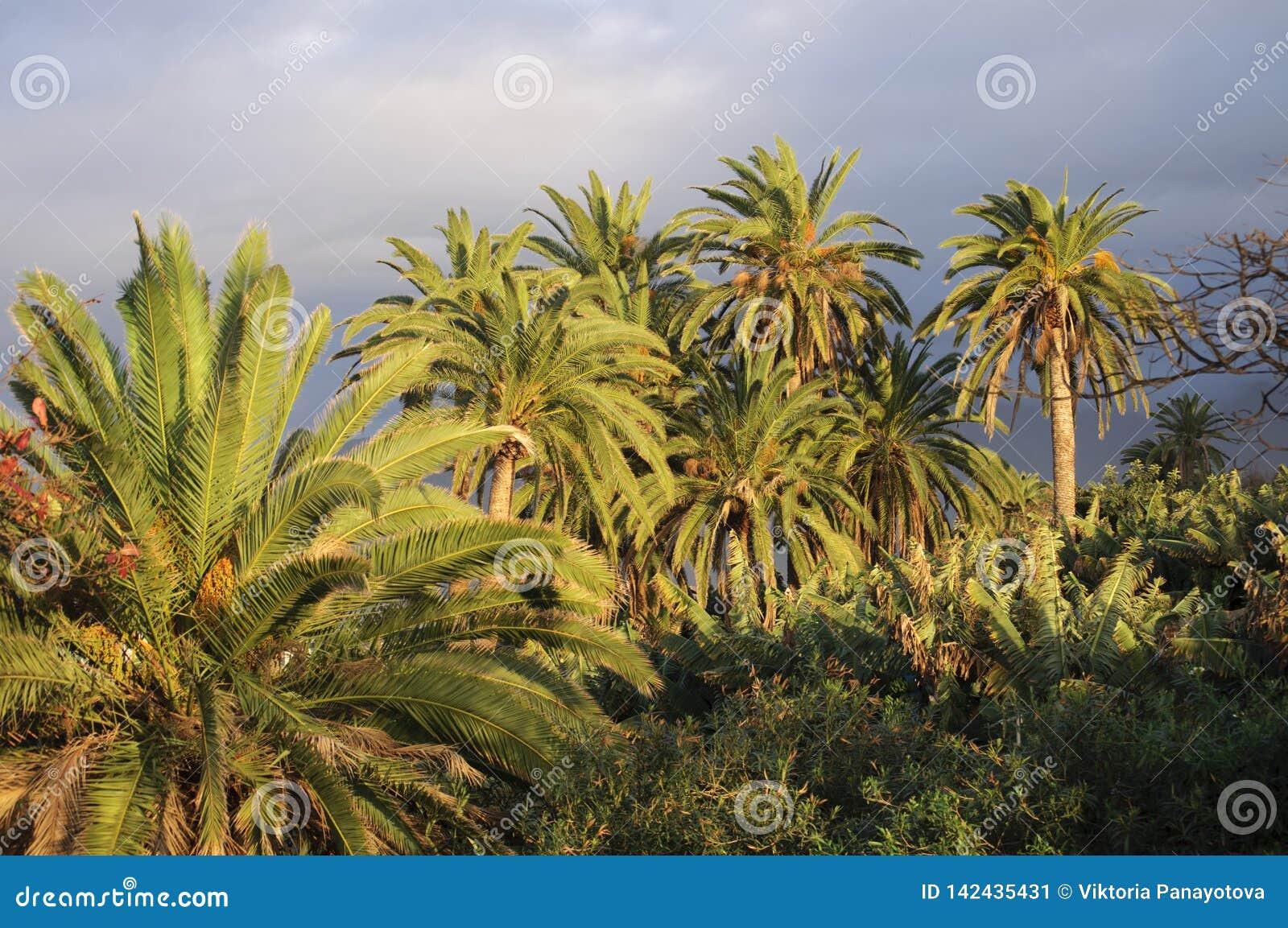 Palmen und bew?lkte Himmel