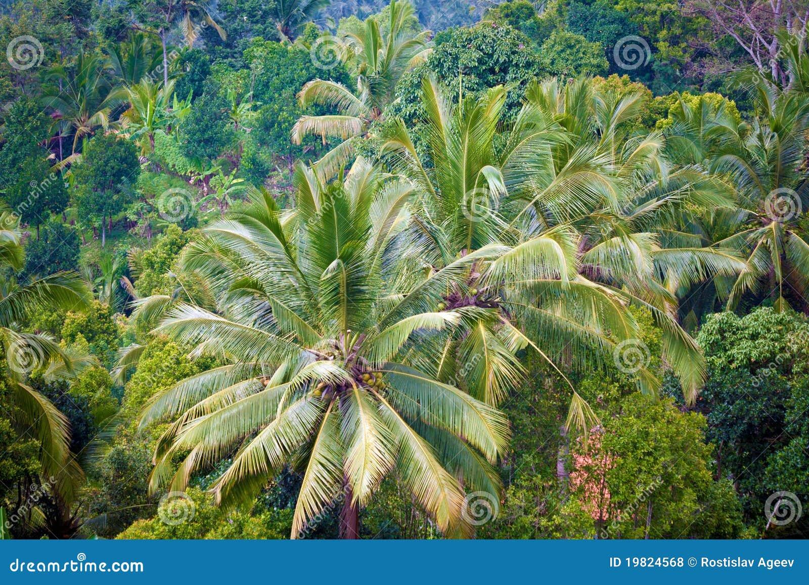 Dschungel Dschungel