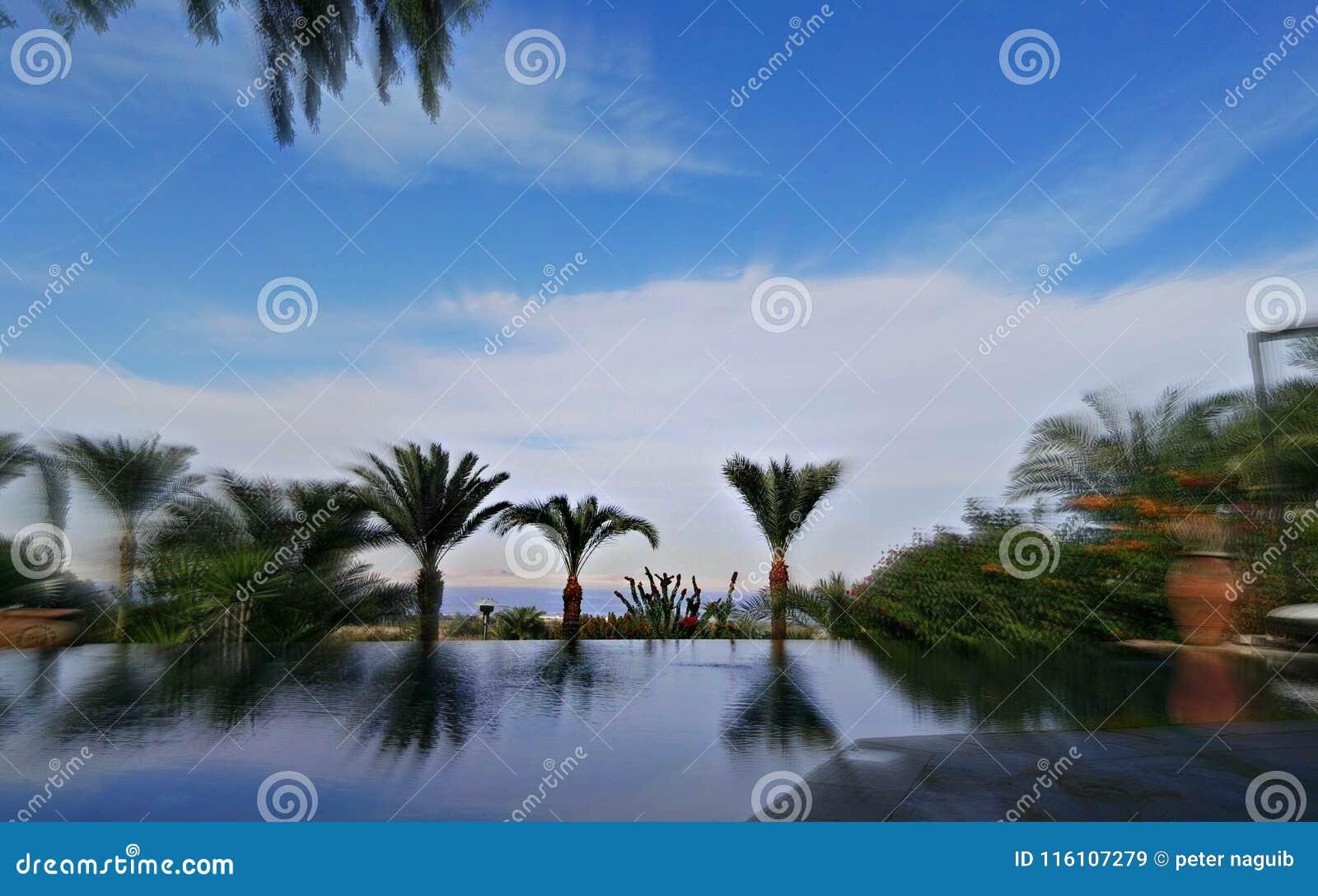 Palmenbezinning