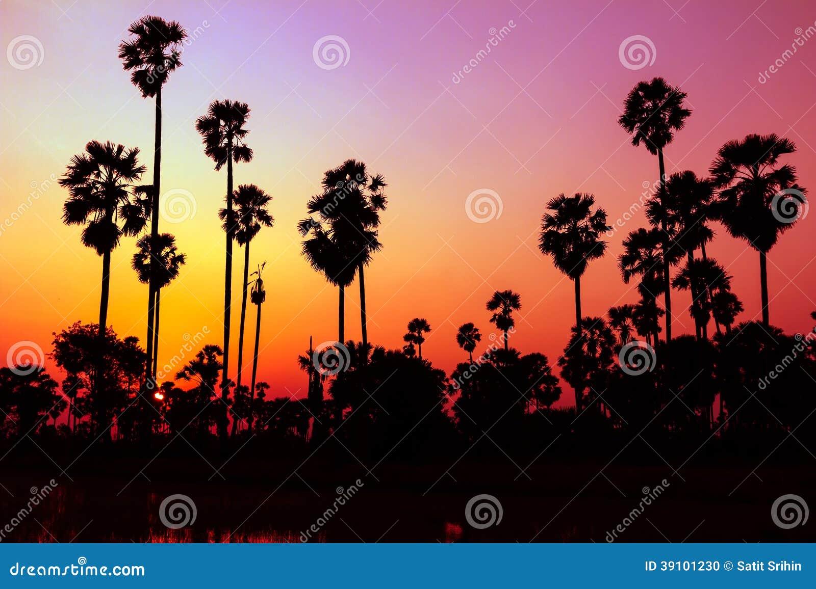 Palmensilhouet