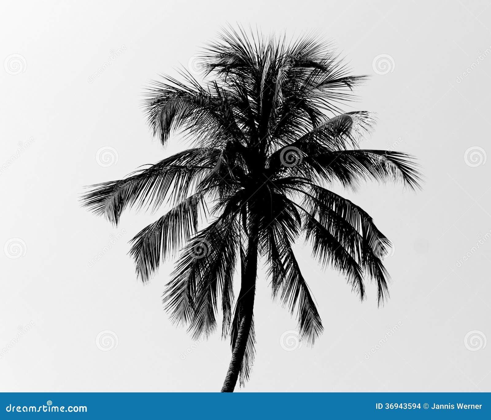 Palmera blanco y negro