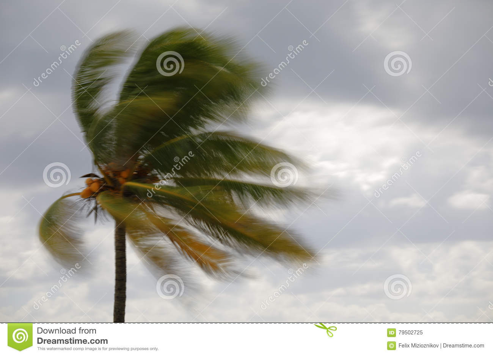Palmera borrosa en el viento