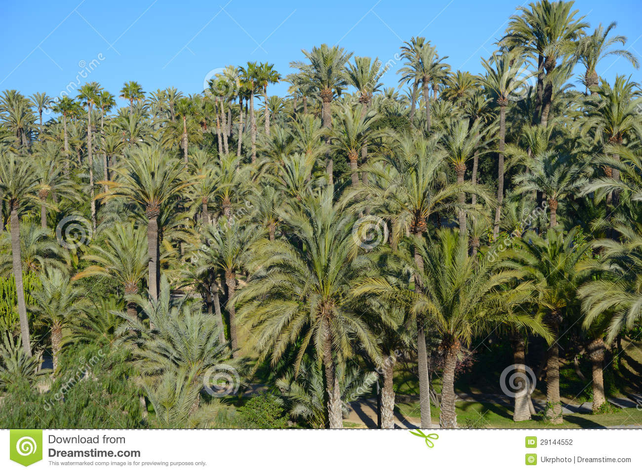Palmeral Of Elche, Spain Stock Photography - Image: 29144552