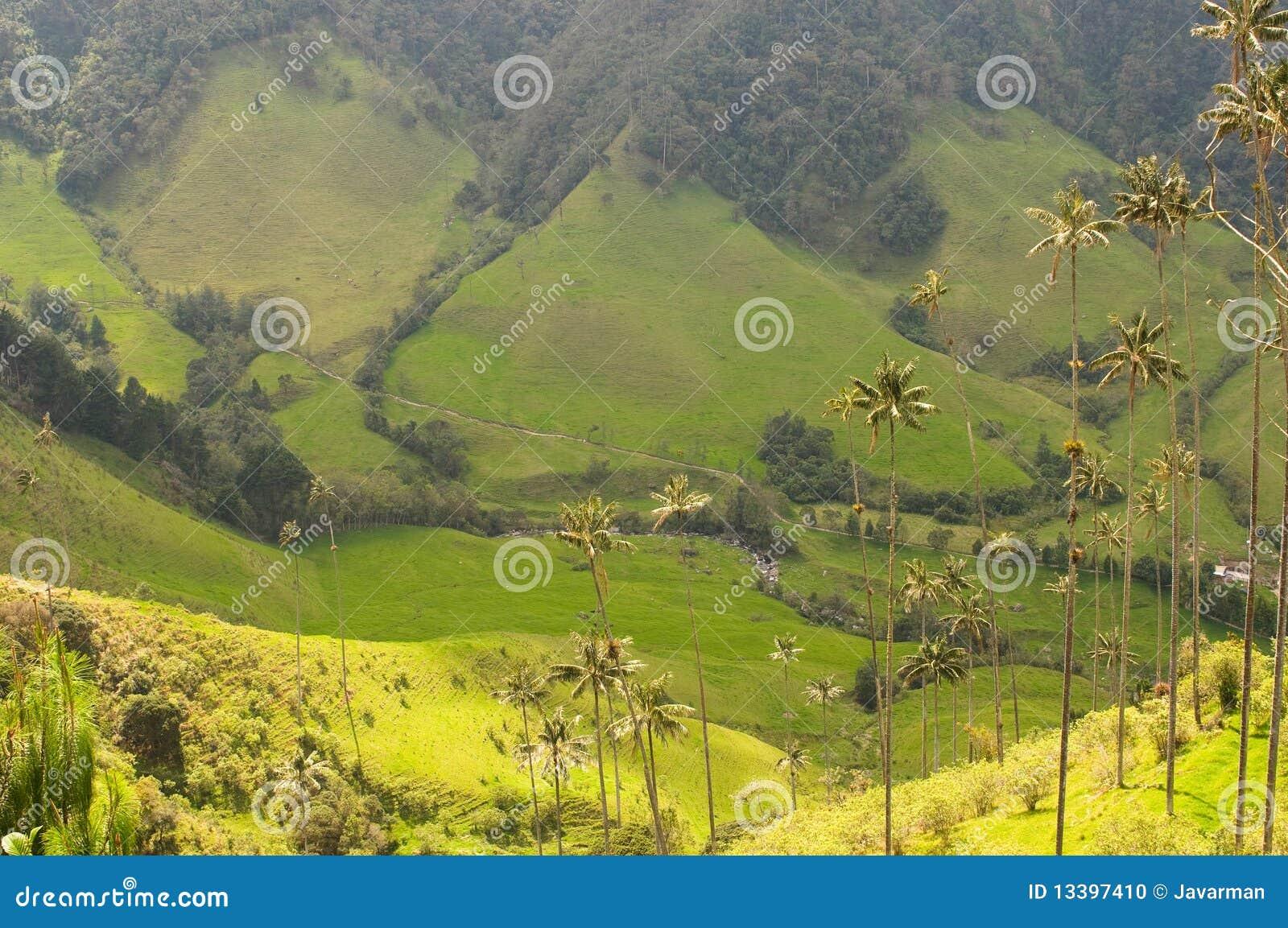Palmeras de la cera del valle de cocora colombia foto de for Dreamhome com