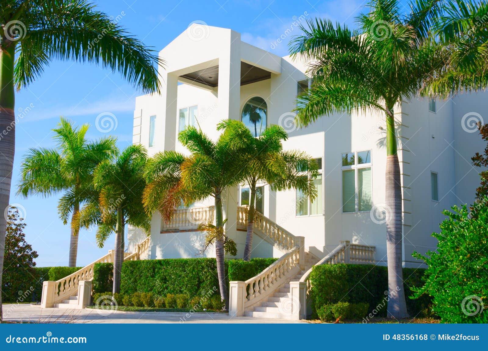 Palmeras de lujo de la casa w de la mansi n tropical foto - La casa de las palmeras ...