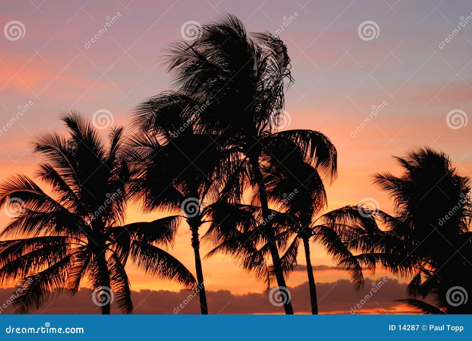 Palmeras en la puesta del sol