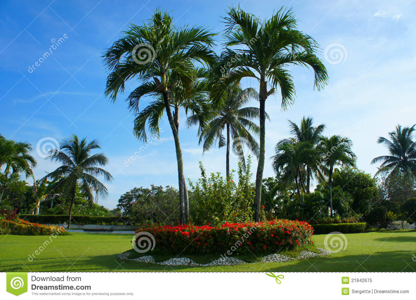 Palmeras en un jard n foto de archivo libre de regal as for Jardines con palmeras
